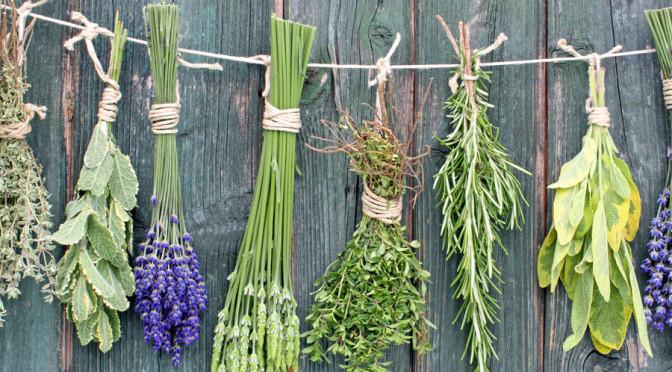 Травы – спутники красоты и здоровья